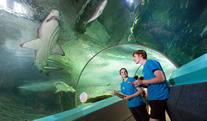 PACE students observe the marine wildlife at Manly SEA Life Sanctuary during their 步伐 activity